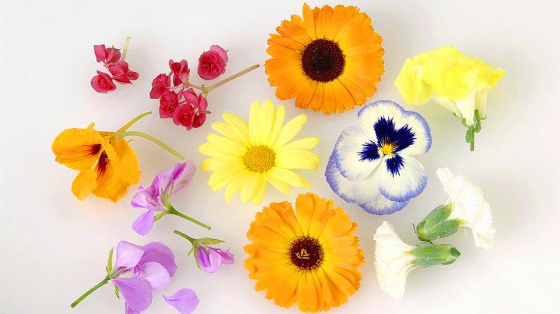 jedle kytky