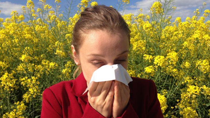 alergie-728x409.jpg