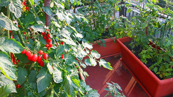 balkony-text-2-728x409.jpg