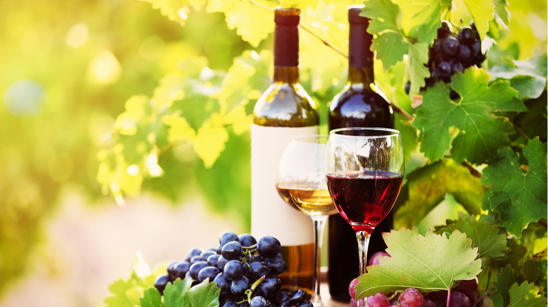 kviz vino