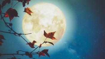 lunar-18-352x198.jpg