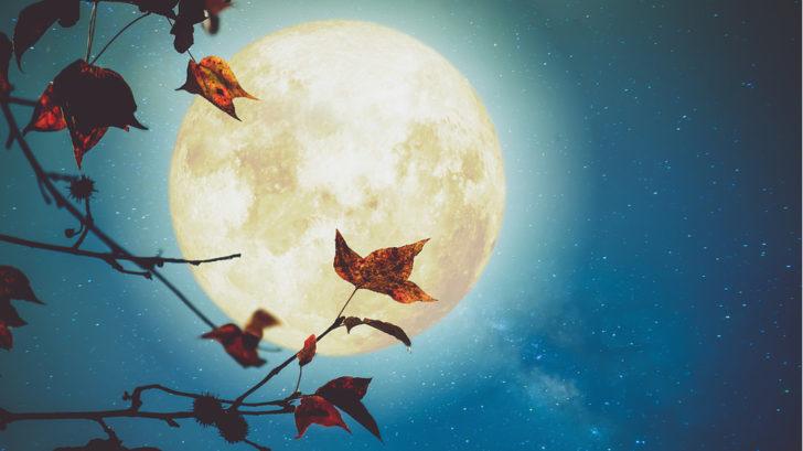 lunar-18-728x409.jpg