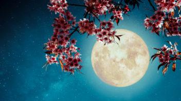 lunar-17-352x198.jpg