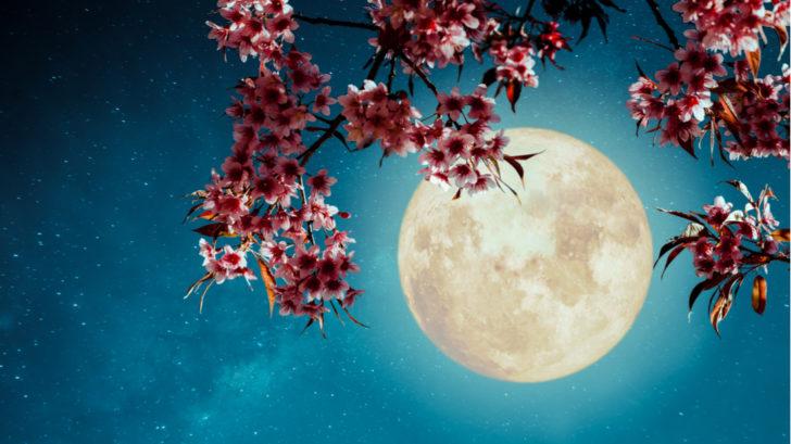 lunar-17-728x409.jpg