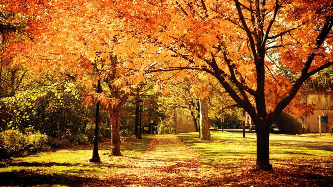 autumn-2-1100x618.jpg