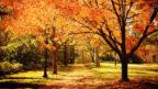 autumn-2-144x81.jpg