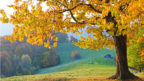 kviz-stromy-144x81.jpg