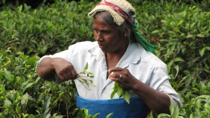 srilanka6-728x409.jpg