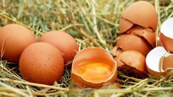 egg-1510449_1280-352x198.jpg