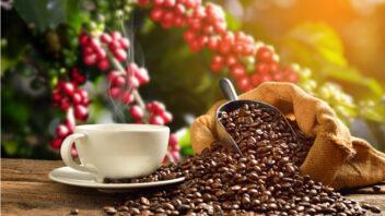 kofein-1-352x198.jpg