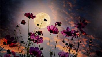 lunarni-kalendar-352x198.jpg