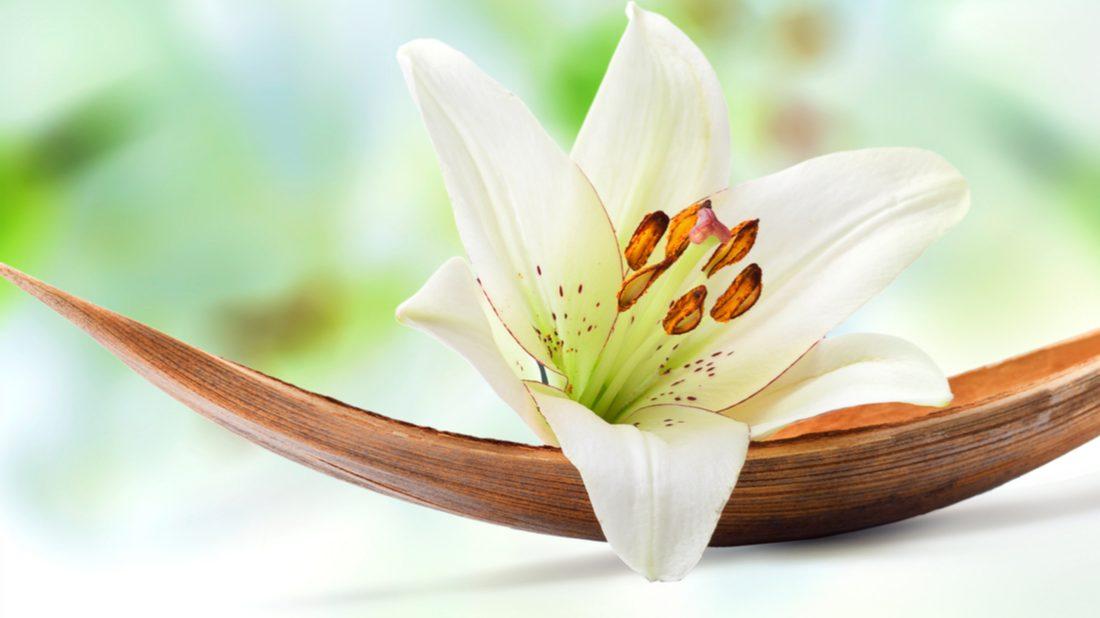 kviz-kvetiny-1100x618.jpg